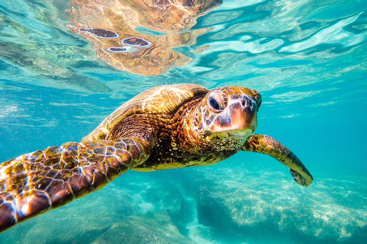 Cocos-Galapagos Swimway Proposed to Shelter Migrating Endangered Species