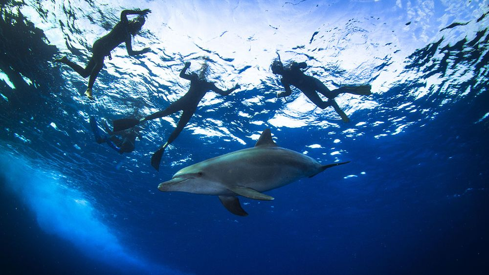 egypt scuba diving