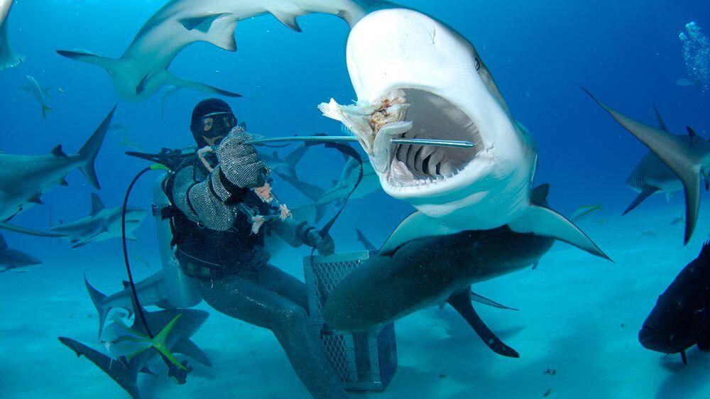 A scuba diver feeds a shark