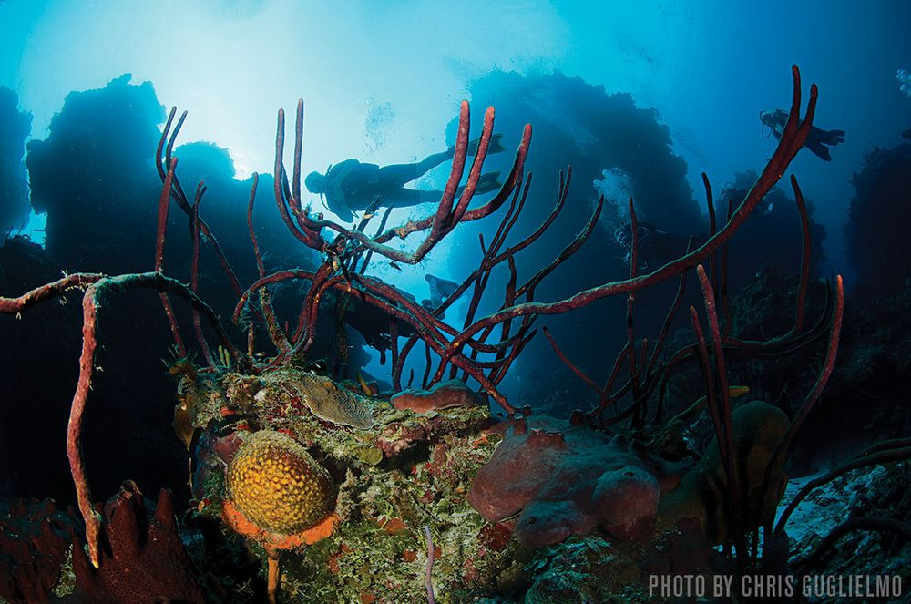 Best Dive Sites In The World Sport Diver - 34 incredible underwater photographs reveal nature best