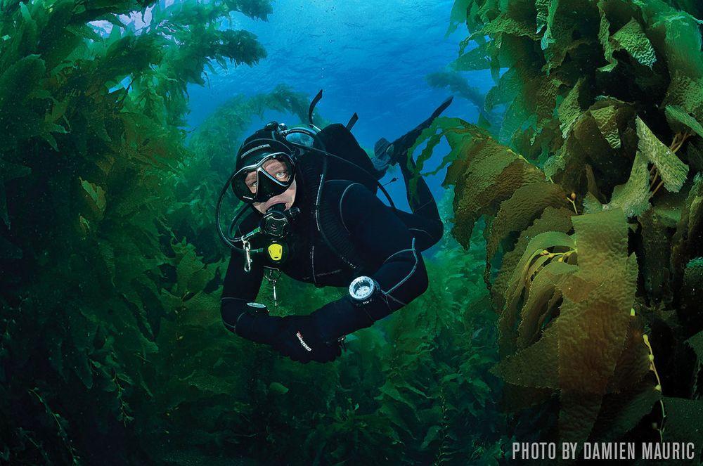 San Clemente Island Scuba Diving On Californias Vibrant Hidden Gem
