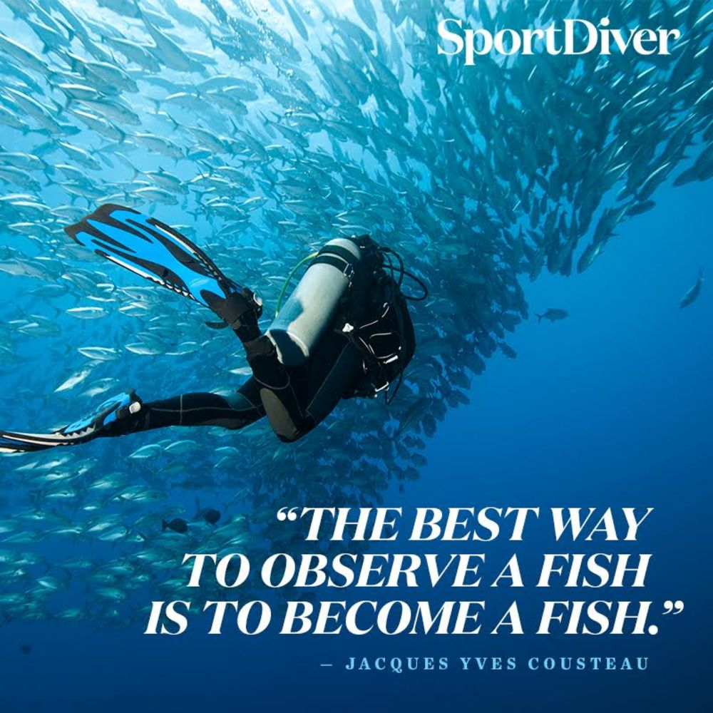 5 Inspiring Quotes Scuba Divers Will Love Sport Diver