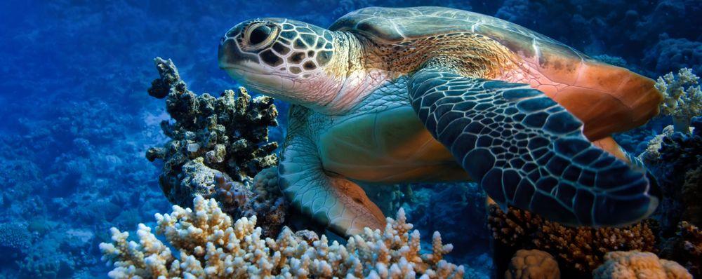 Isla Cozumel   Sport Diver