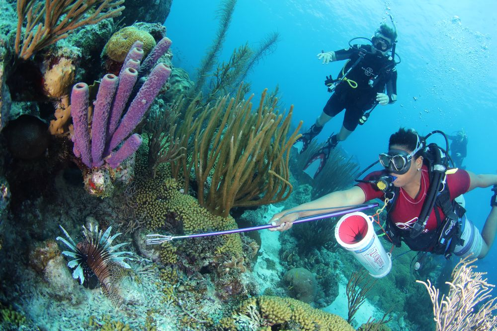 Experience the Best Scuba Diving in Curaçao with Ocean Encounters