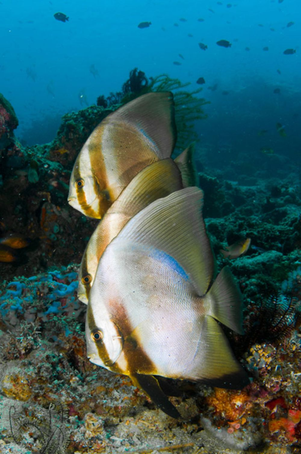 the colorful life of sea creatures sport diver
