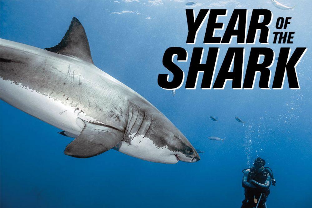 Great White Shark Conservation | Shark Conservation Sport Diver