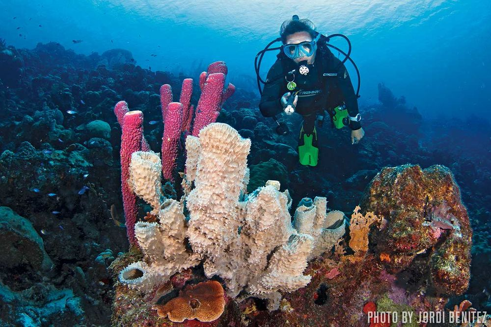 Where The World Learns To Scuba Dive Sport Diver
