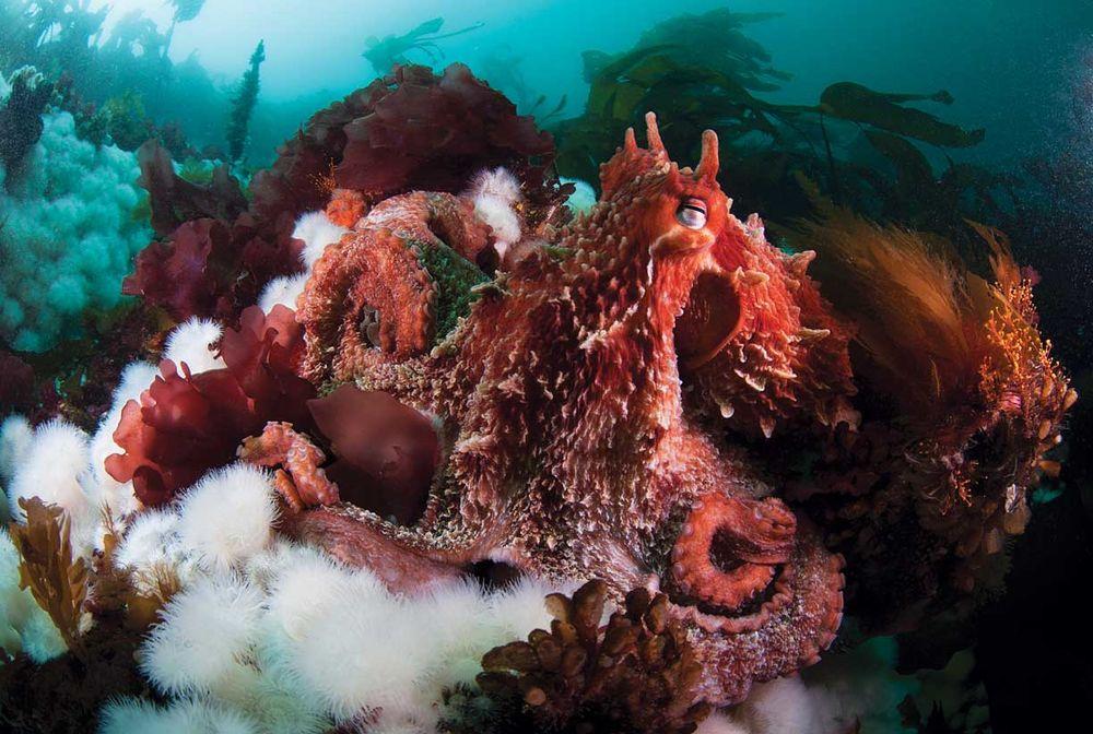 b794e7ec7da03 25 Exotic Scuba Diving Destinations