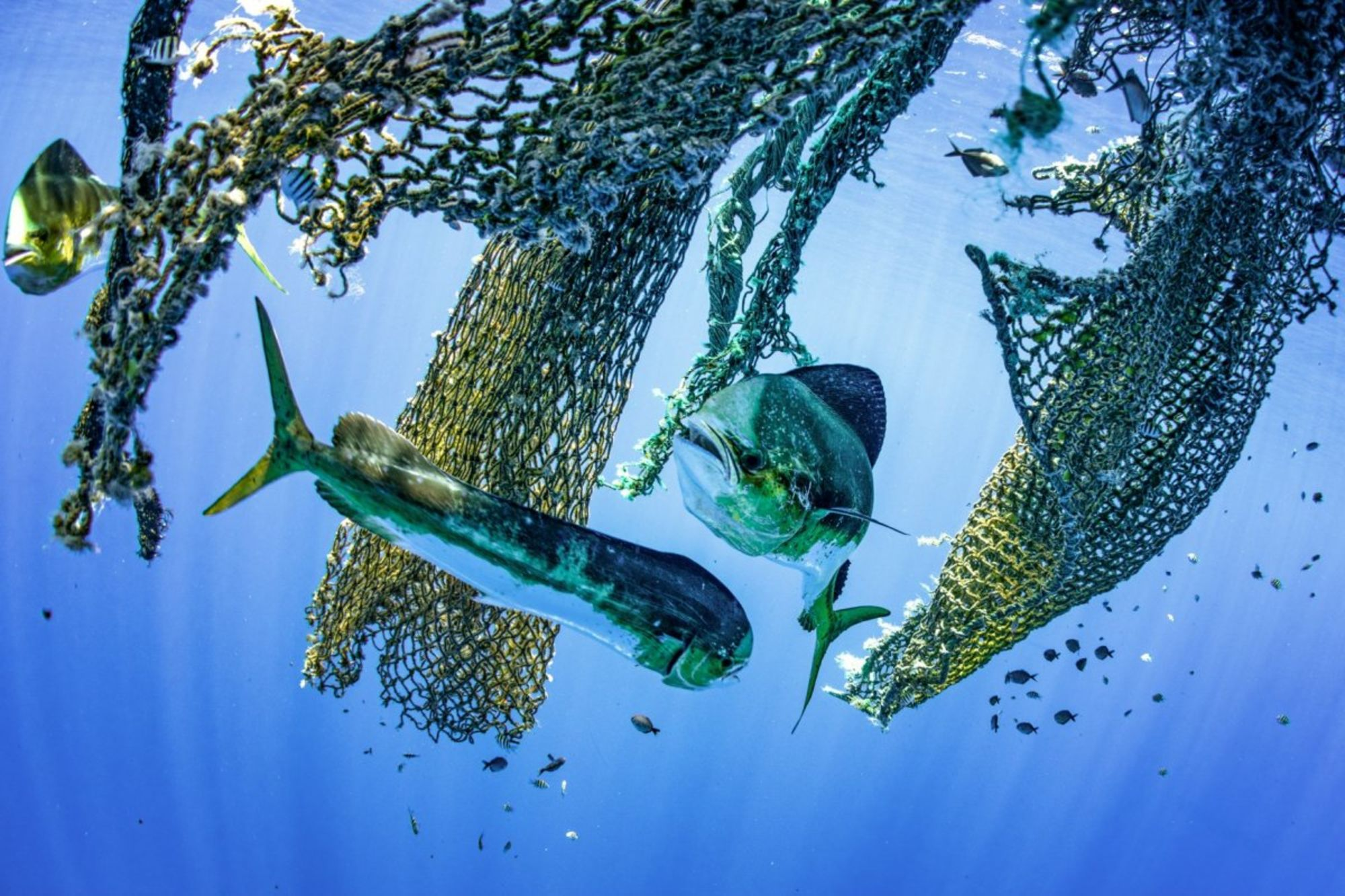 The 2019 Kona Underwater Photo Contest Results Are In