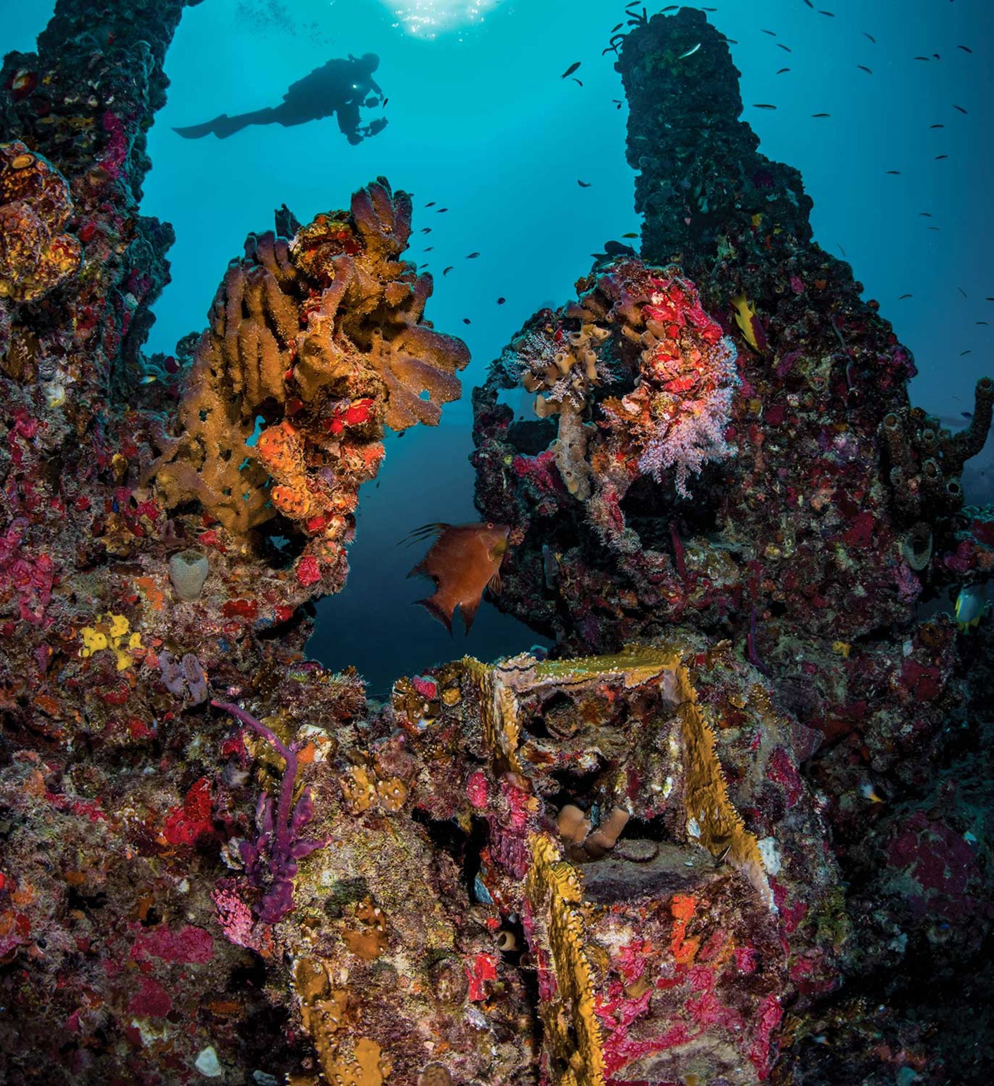 The PADI Wreck Diver Course
