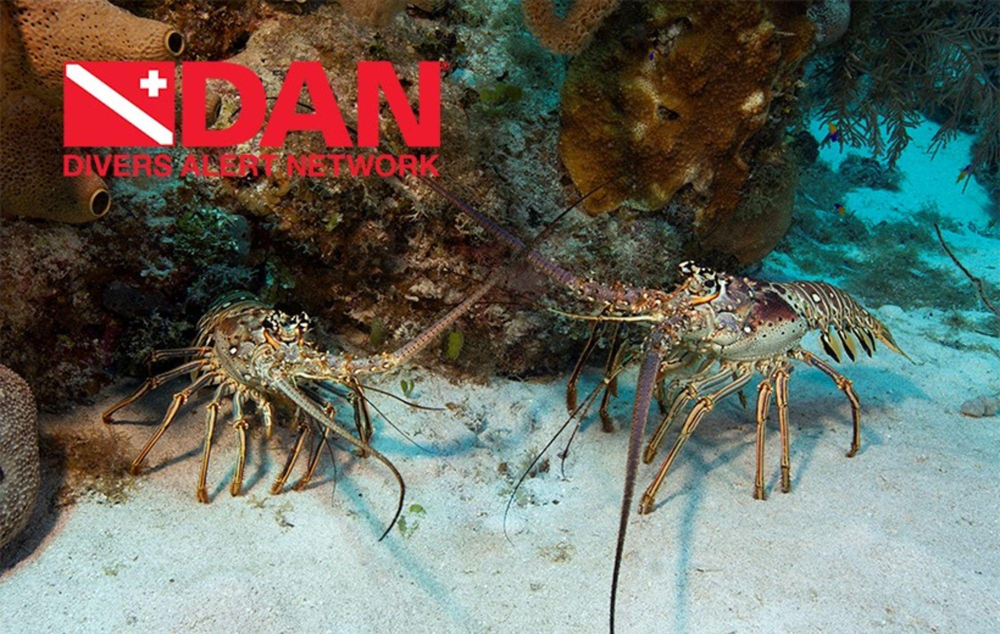 DAN Encourages Divers to Enjoy Lobster Mini Season Safely