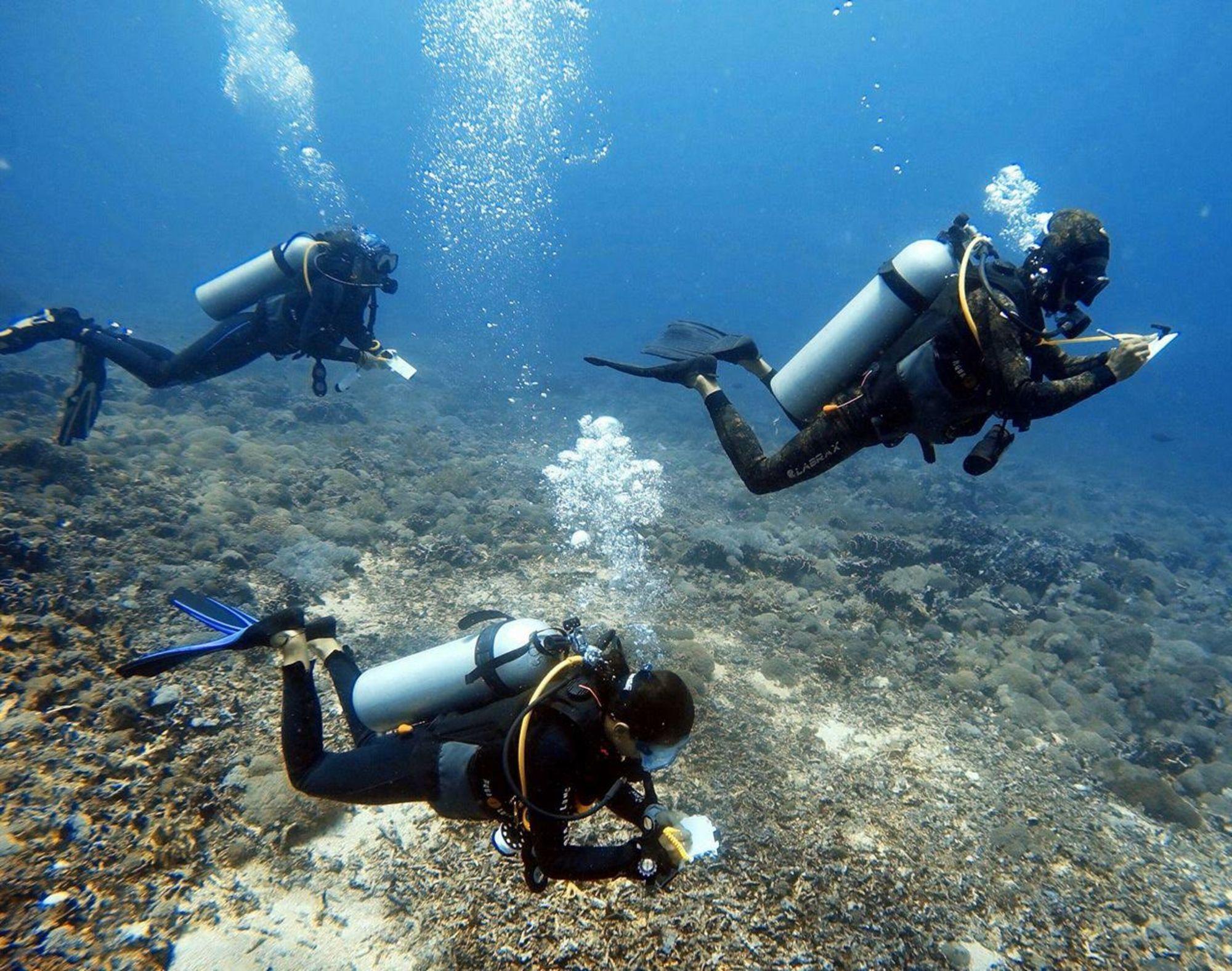 Conservation Spotlight: Gili Shark Conservation Project
