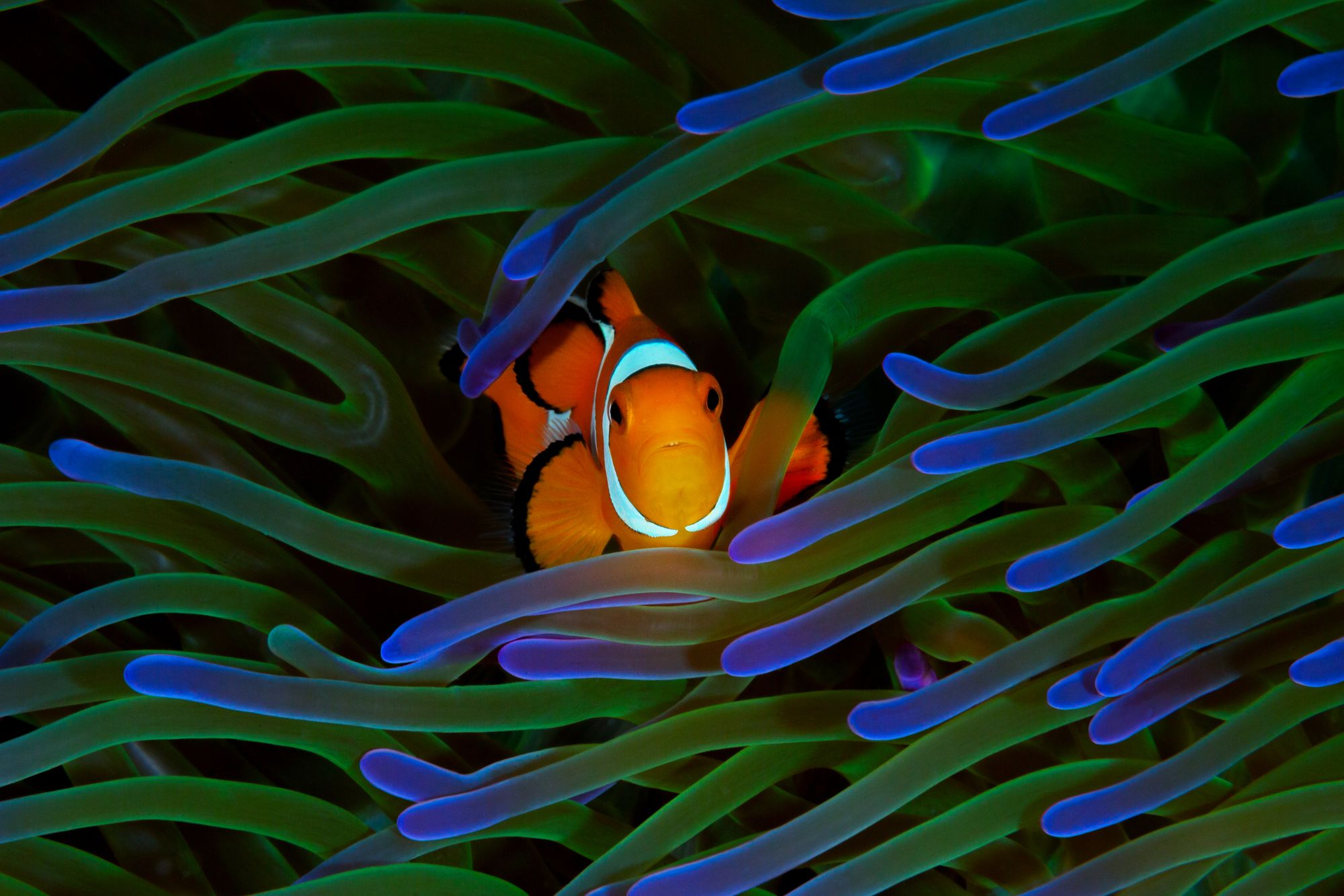 What Happens to a Clownfish When It Changes Sex?