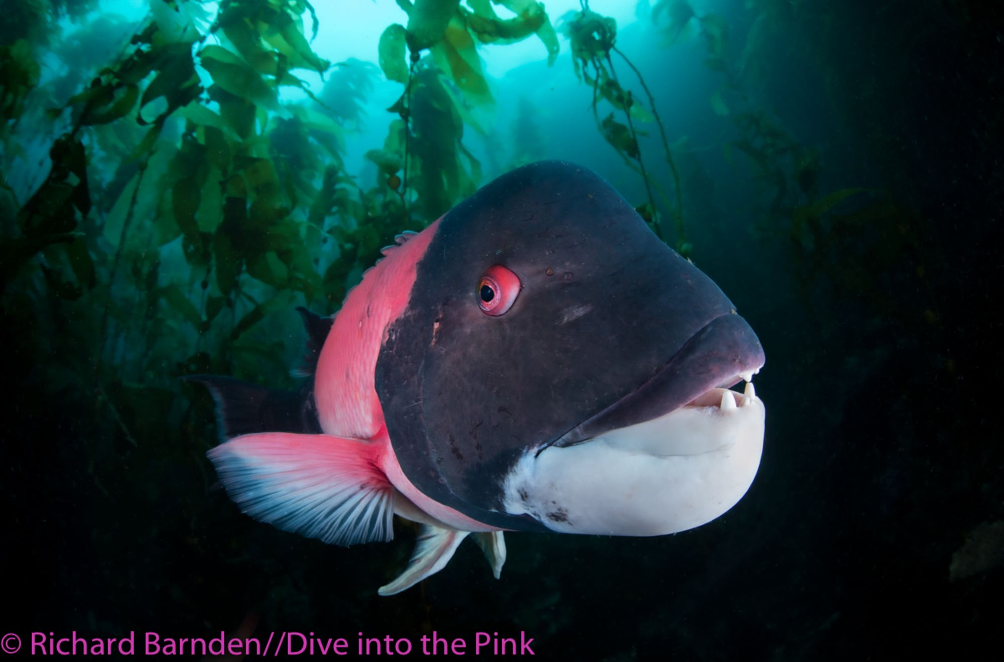 Dive Into The Pink Announces Winners of Third Annual Underwater Photo Competition