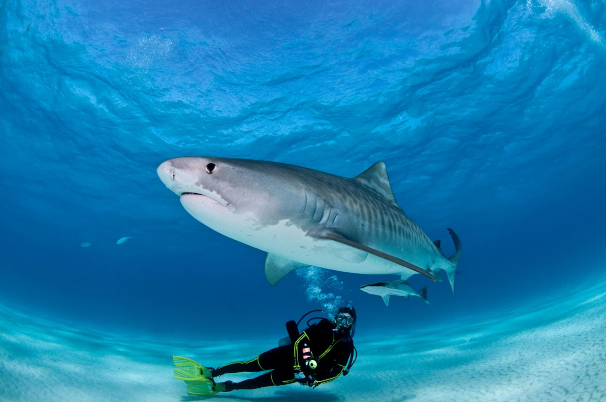 How Should You Deal with an Aggressive Shark When Scuba Diving?