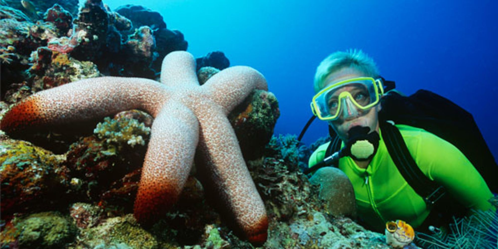 40 Insider Tips for Dive Travel