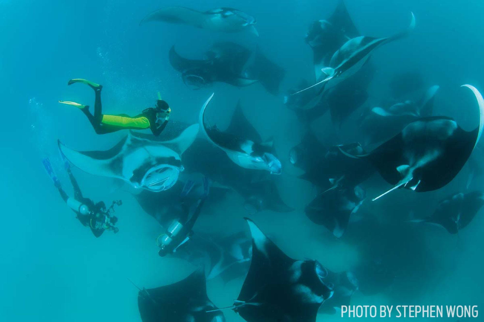 Unraveling the Secret Lives of Mantas in the Maldives
