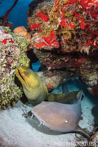 cozumel diving nurse shark moray eel