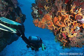 palancar dive sites cozumel reef