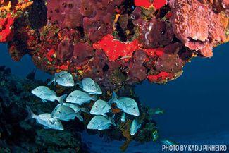 silver fish cozumel scuba diving