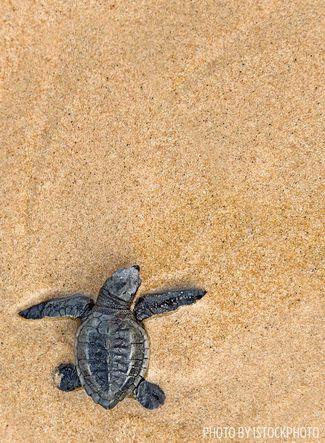 turtle beach cozumel