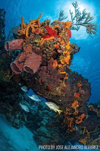 scuba diving cozumel coral reef