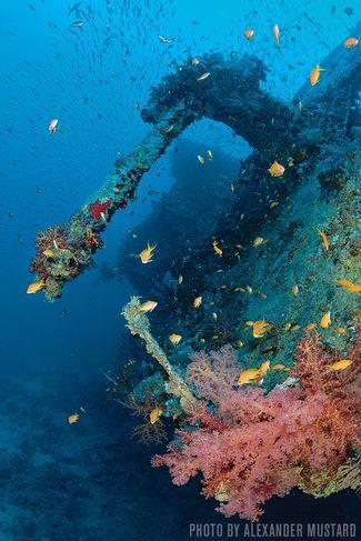 HMS Thistlegorm — Egypt, Red Sea
