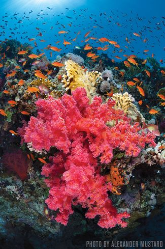 Ras Mohammed — Egypt, Red Sea