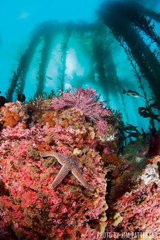 Point Lobos — Carmel, California