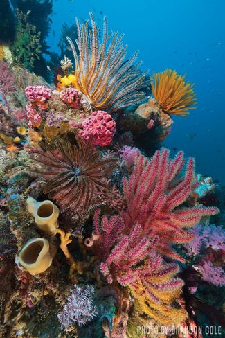 Scuba Diving in Flores and Alor, Indonesia