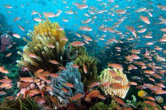 Roma scuba diving site Wakatobi