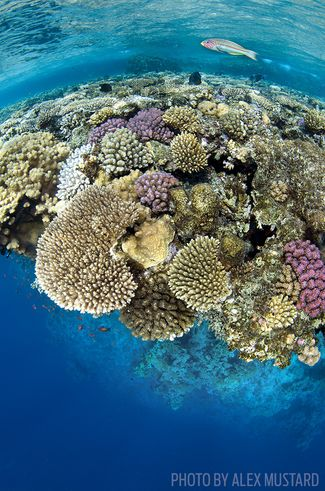 Underwater Photography Tips: Shooting Coral Reefs