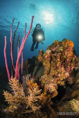 Scuba diving Grand Cayman underwater reefs and sharks
