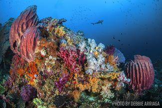 Lush corals underwater scuba diving Indonesia