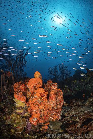 fairyland scuba diving site st lucia