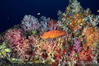 scuba diving thailand hin muang