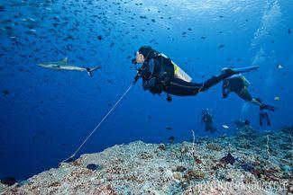 scuba diving blue corner palau