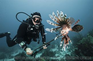 lionfish spearfishing hunting scuba diving