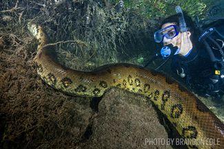 scuba diving snakes rivers
