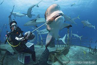 shark feed scuba diving bahamas
