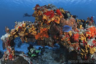 cozumel coral reef