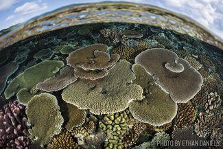 corals fiji