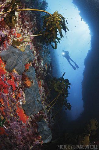 new zealand scuba diving