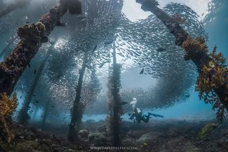 9 Amazing Underwater Photos from Sport Diver's May Photo Contest