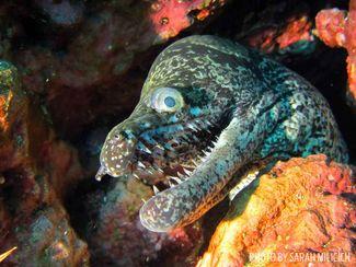 moray eel new zealand