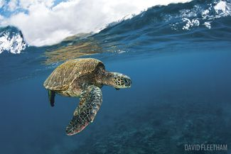 When To Go Scuba Diving with Sea Turtles in Hawaii