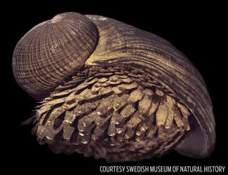 armored snail