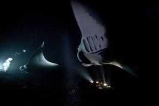 manta ray night dive Kona Hawaii