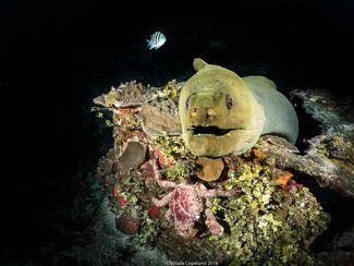 Eel Underwater Roatan