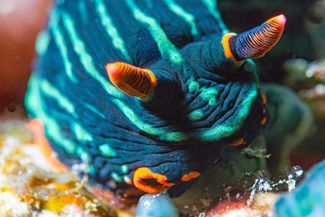 nudibranch underwater photography